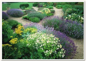 Garden Ideas Cape Town garden services cape town | garden maintenance cape town